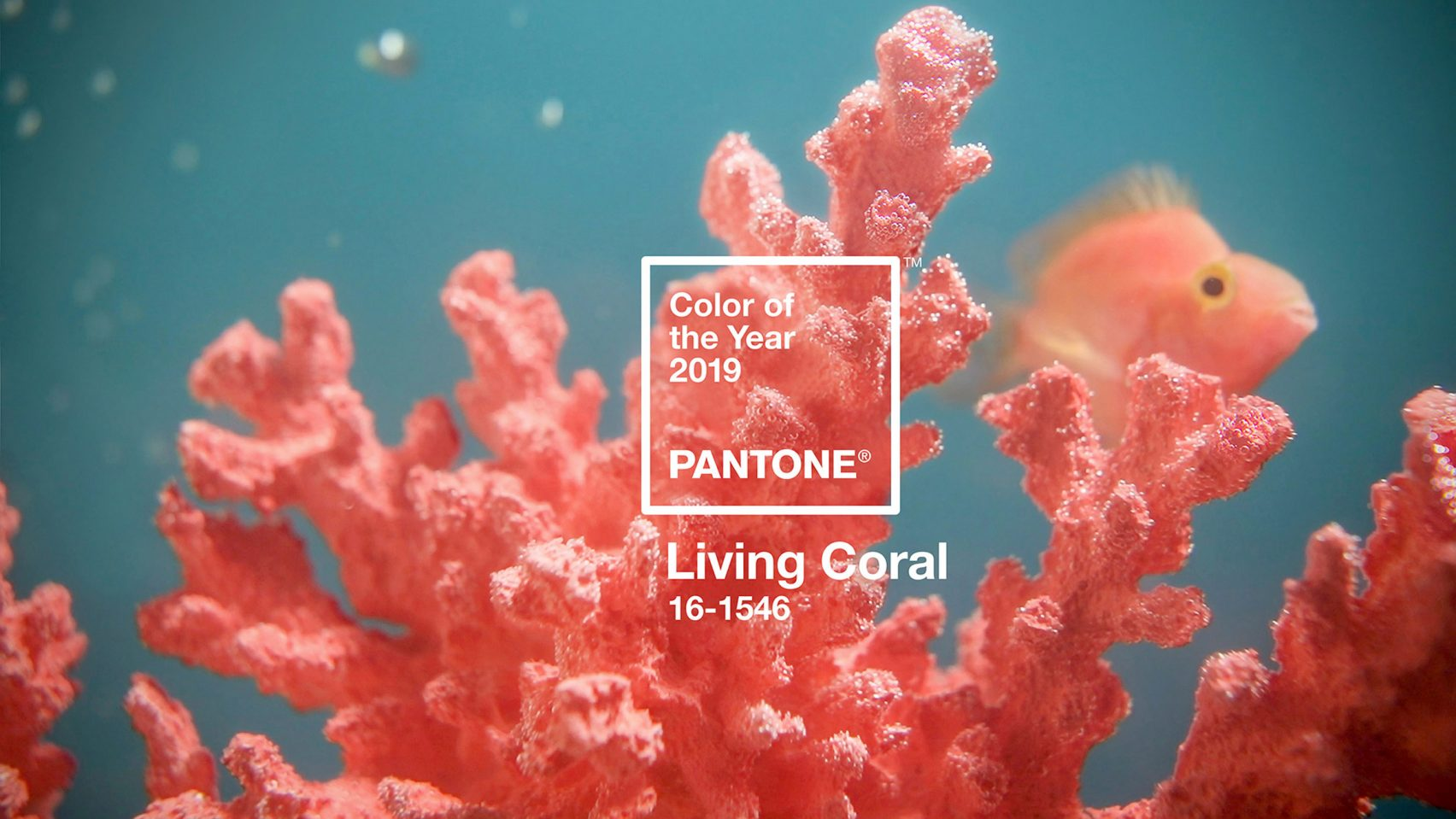 pantone-colour-of-year-2019-living-coral-mindy-weiss